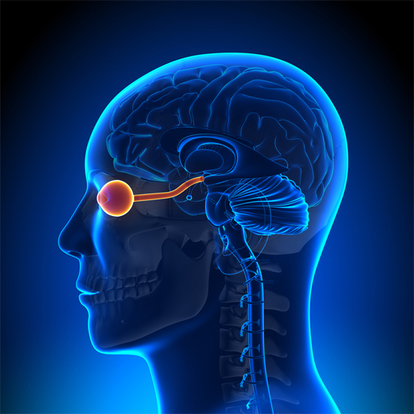 Eyesight is complex interactions between eyes and brain